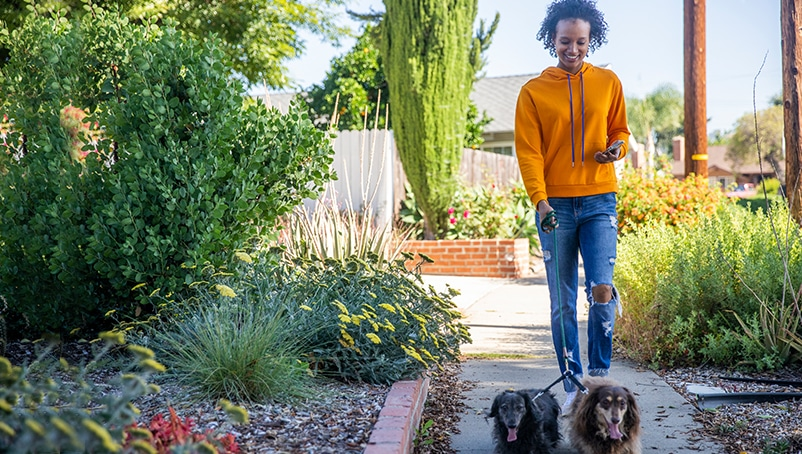 Dog Walking Legal Requirements & Laws Every Dog Walker Must Know